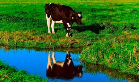¿Es la leche mala o buena? Lácteos: inconvenientes y cuando evitarlos