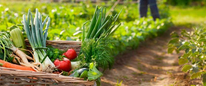 Por qué comprar alimentos ecológicos