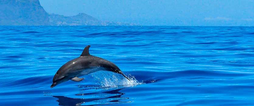 Niveles de omega 3 en delfines