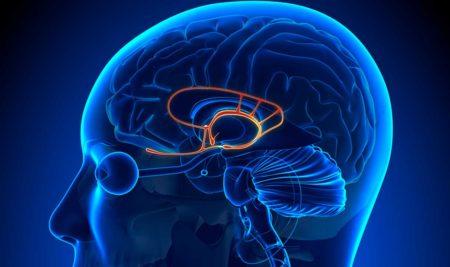 Qué es la amígdala cerebral y por qué no apreciamos lo que tenemos.