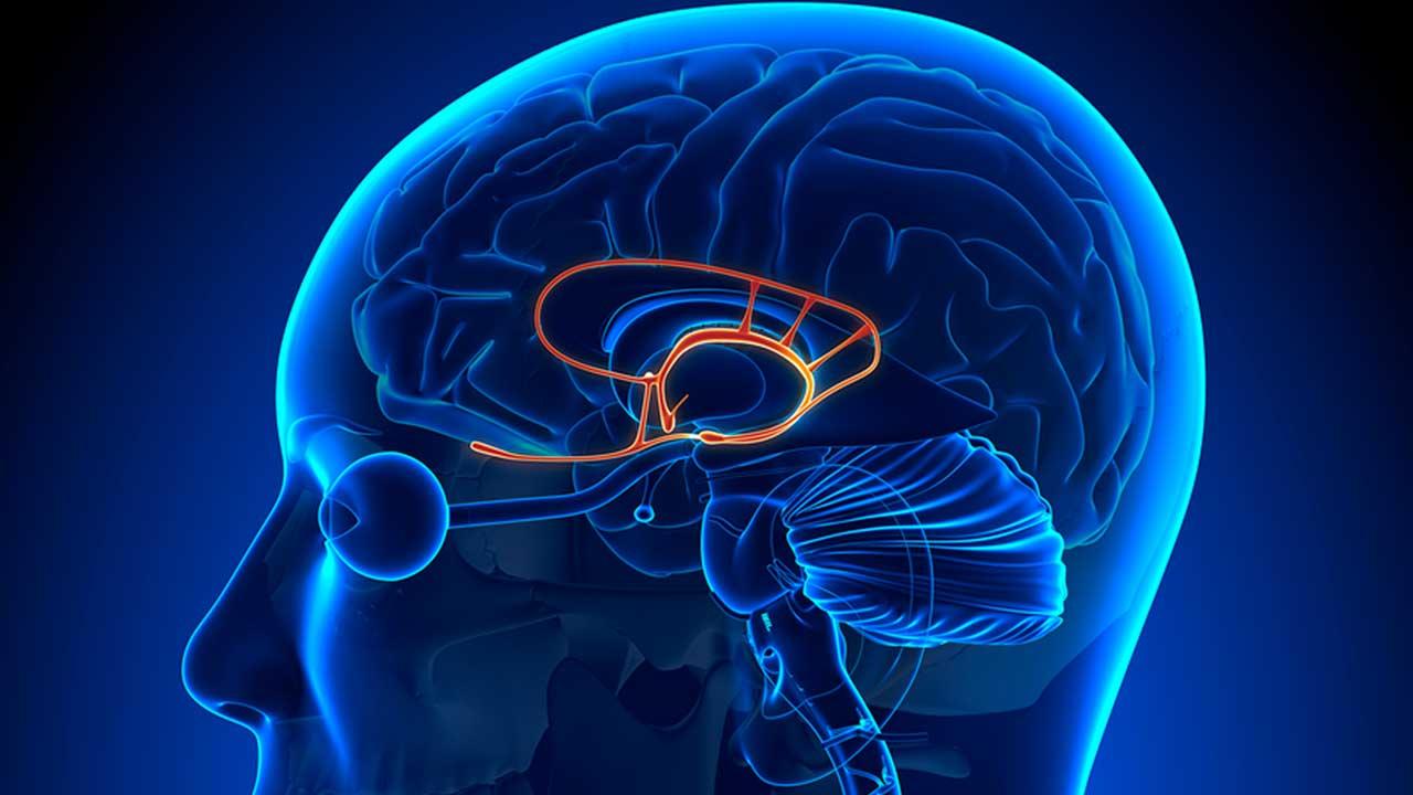Que es la amígdala cerebral