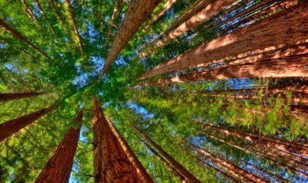 Cómo vivir más y mejor: cuatro estrategias poco convencionales