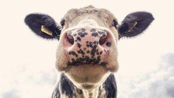 ¿Es la leche mala o buena? Lácteos: inconvenientes y cuándo evitarlos