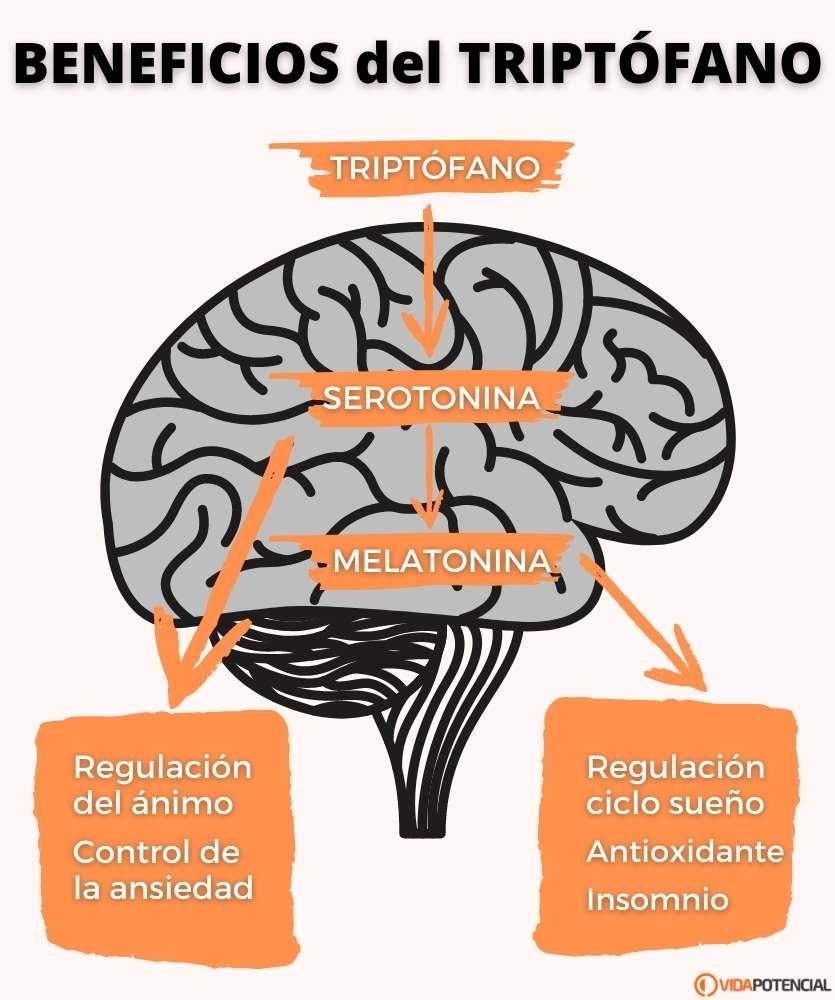 beneficios del triptofano