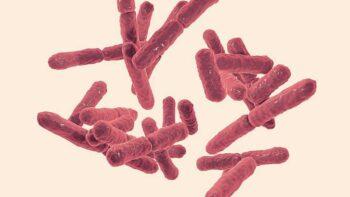 Alimentos probióticos para la microbiota