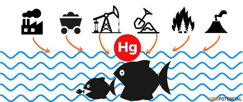 niveles mercurio pescado