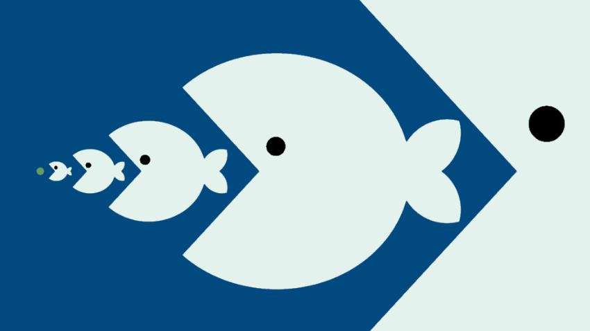 pescado contenido mercurio