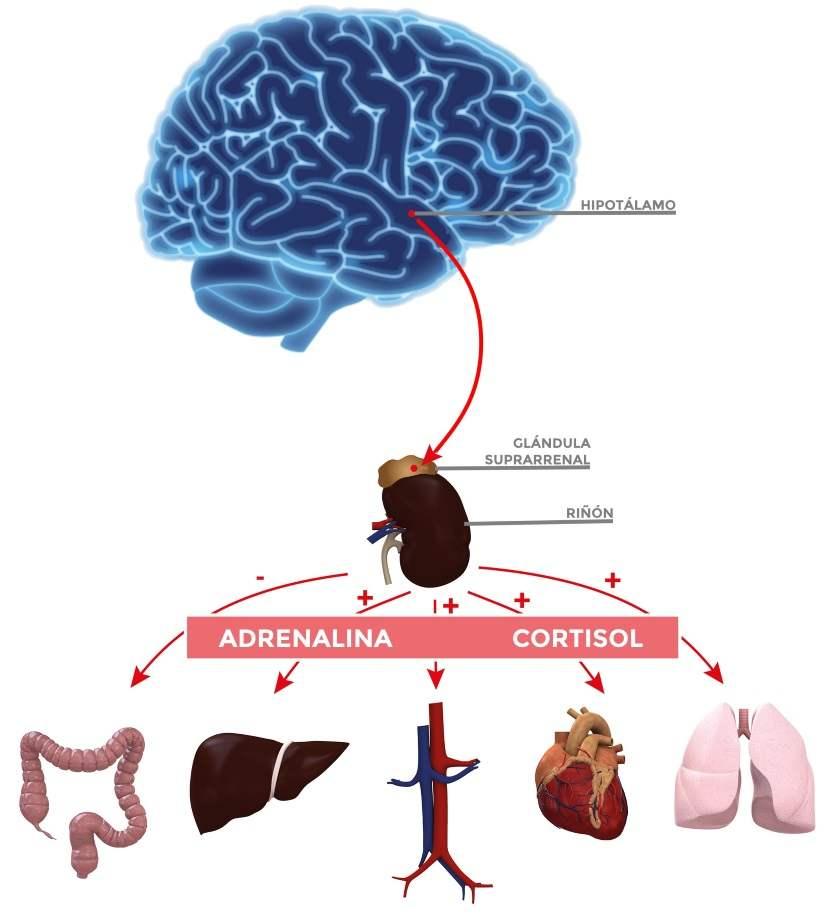 estres cronico sintomas