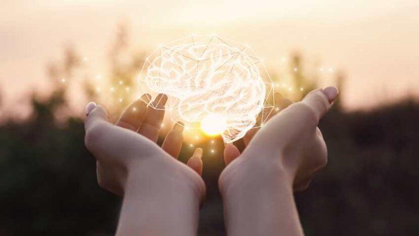neuroplasticidad como funciona