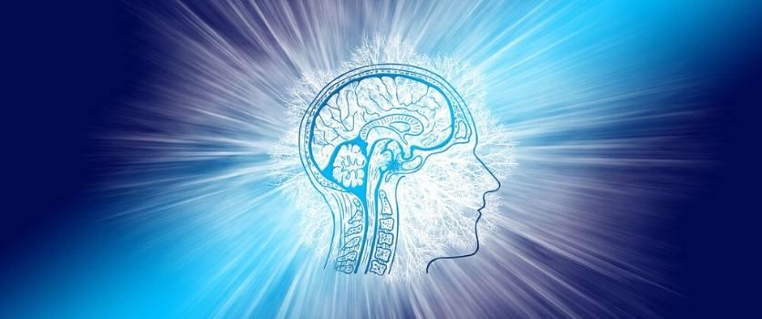 que es neuroplasticidad