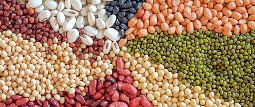 antinutrientes legumbres