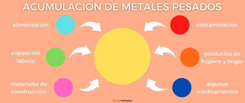Acumulación de metales pesados